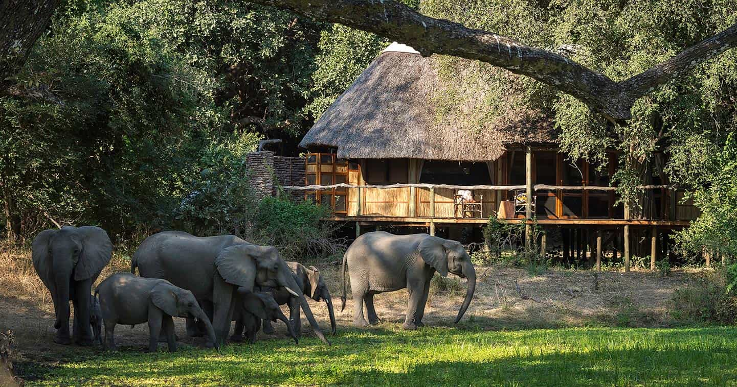 Stay at Bilimungwe Bush Camp in the South Luangwa National Park for the Ultimate Safari Experience