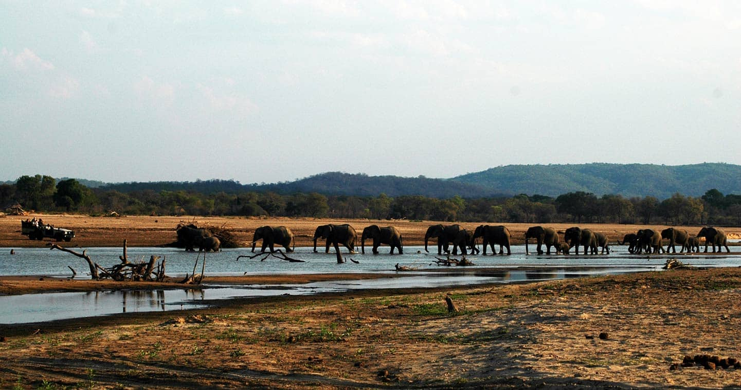 Elephants near Island Bush Camp in the South Luangwa National Park