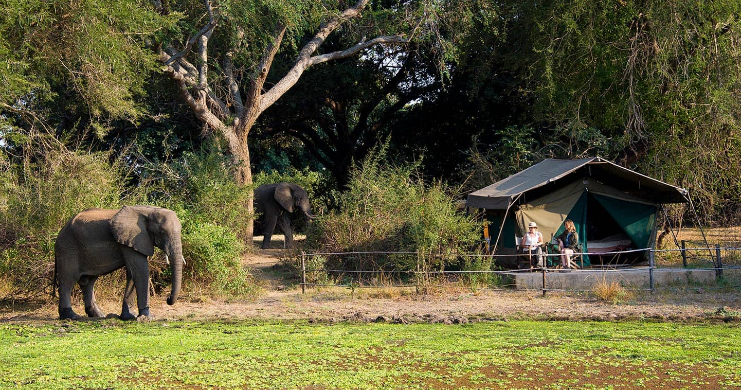 Stay at Flatdogs Camp in the South Luangwa National Park for the Ultimate Safari Experience