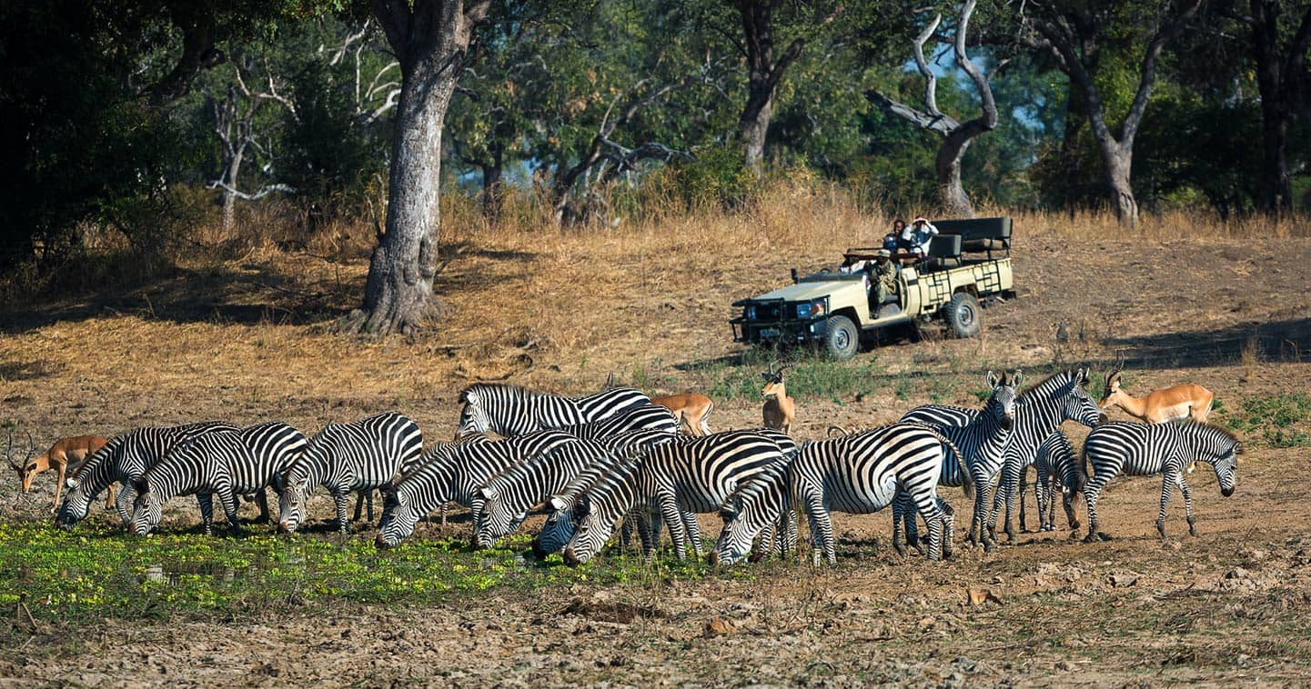 Incredible Safari Game Drive with Luangwa River Camp