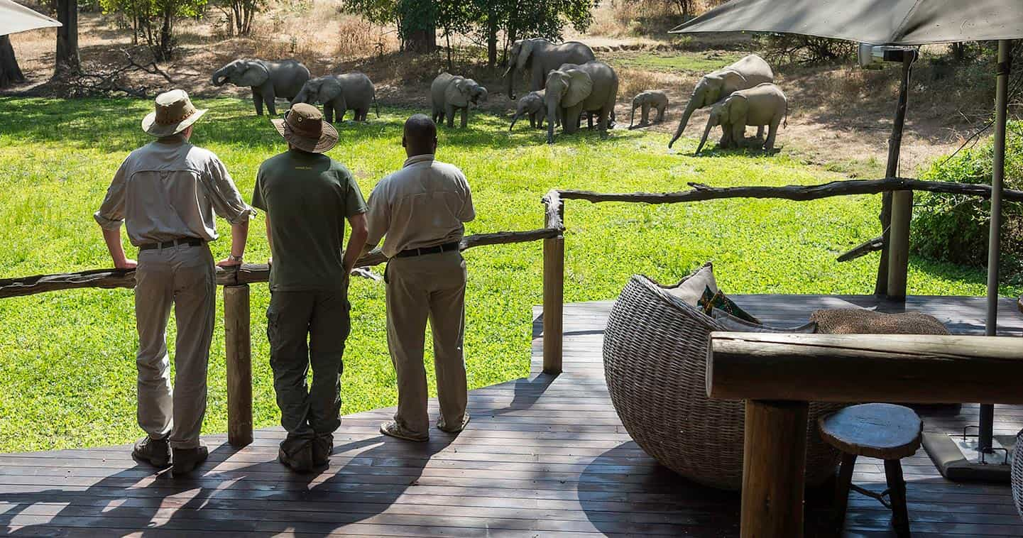 Enjoy the South Luangwa Wildlife Up Close at Bilimungwe Bush Camp