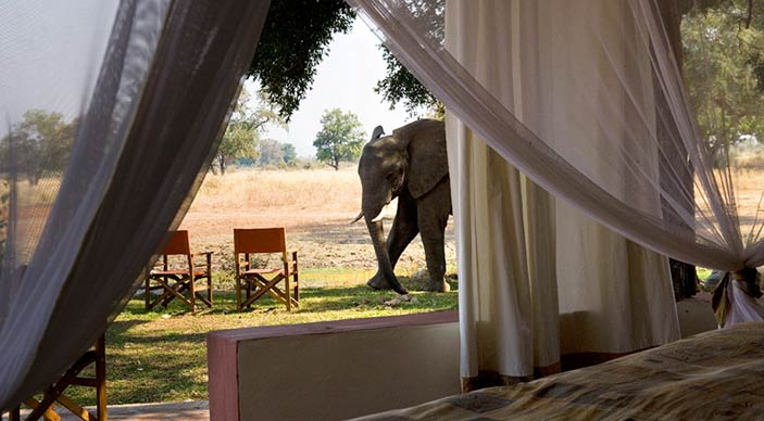 Special offer for Robin Pope South Luangwa Zambia camps