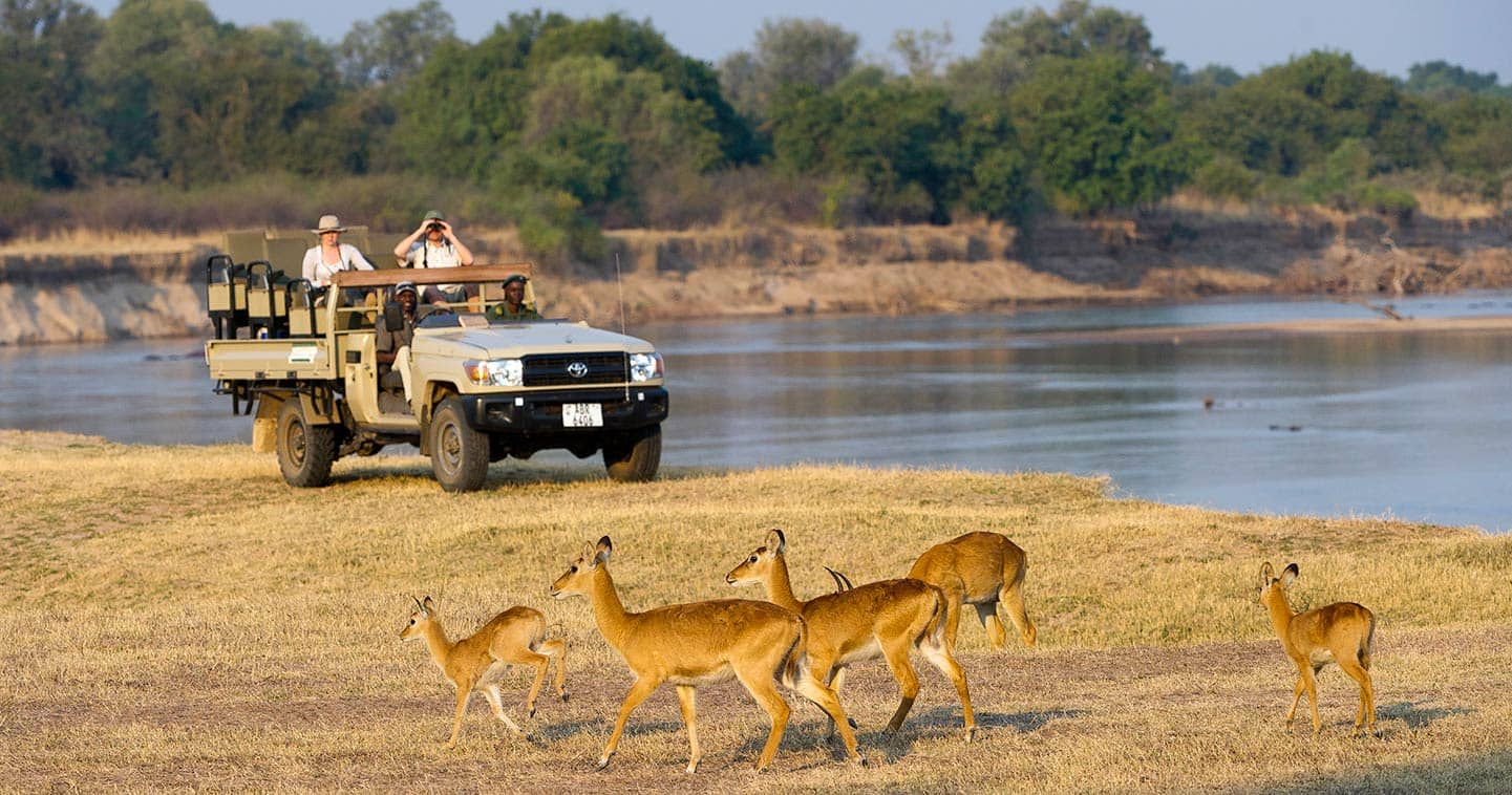 Up close with Wildlife when on Safari with Flatdogs Camp in Zambia